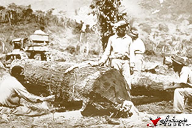 Belize Logwood Cutters