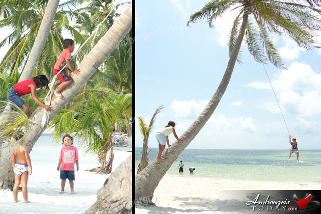 coconut tree with swings