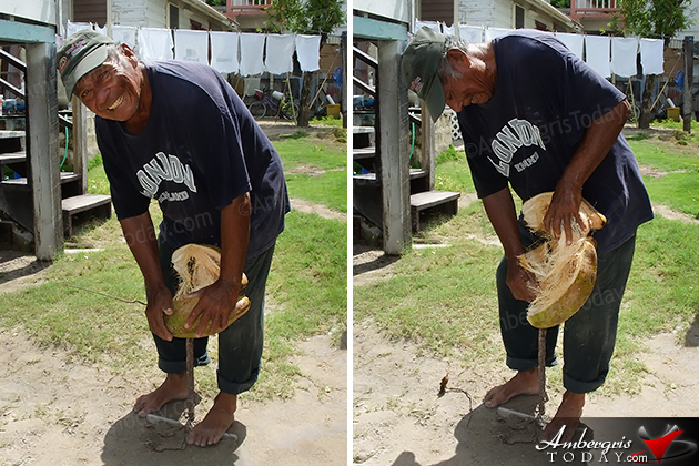 Hardships and Glory of the Coconut Industry