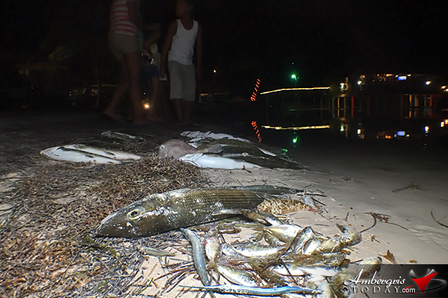 Island Residents Startled as Fish Wash Ashore