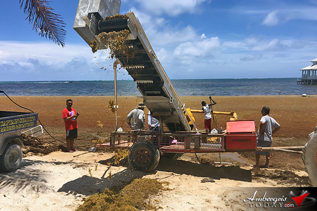 San Pedro, Belize Finds ways to battle accumulating Sargassum