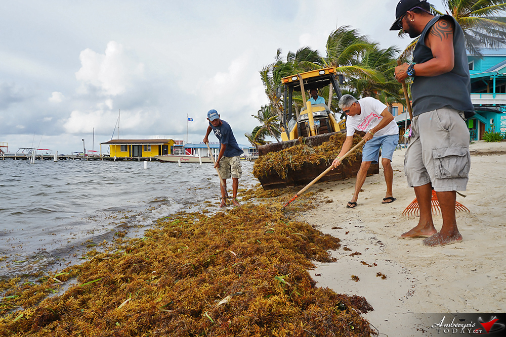 San Pedro Fights Back Against the Smelly Sargassum