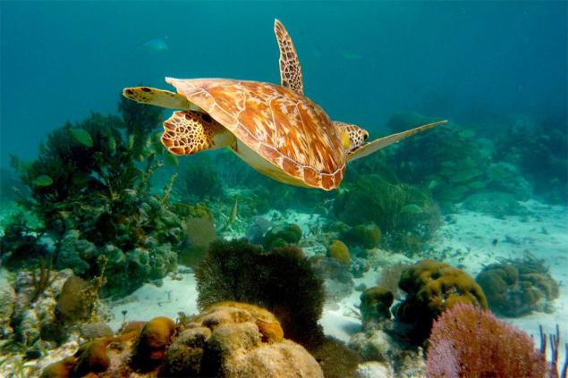 Belize Expands the Size of its Marine Protected Areas