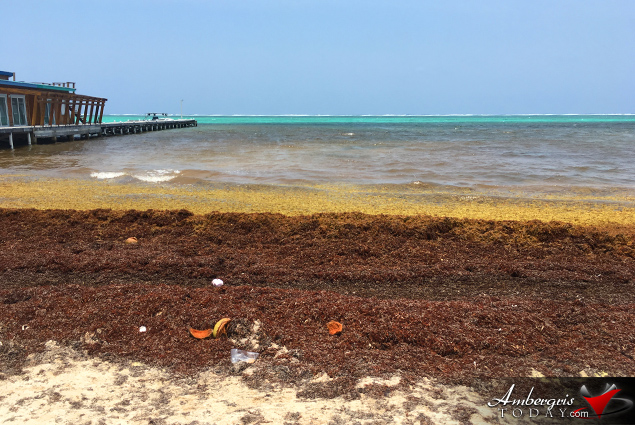 Sargassum Flow Worse than 2018