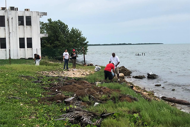 Oceana Belize National Coastal and Riverways Cleanup