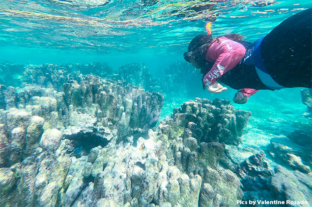 San Pedro's Coral Reef Pillar Garden Is Gone Forever