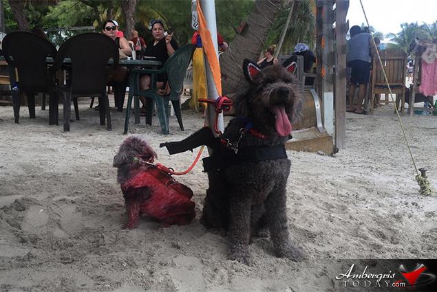 Saga Humane Society's Halloween Spooktacular