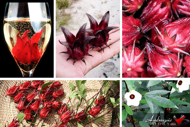 Wild Hibiscus Flowers in Syrup at CG Esthetics