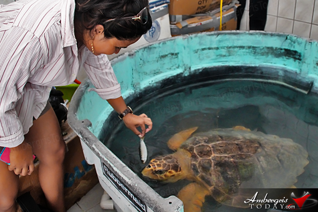 Two Turtles Released Back to the Wild as part of Reef Week 2014