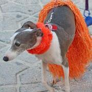 Saga Humane Society 9th Annual Halloween Party