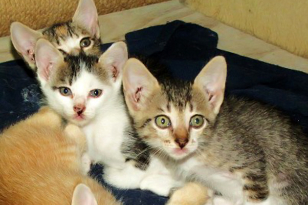 Saga Kittens up for adoption