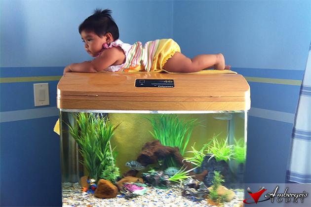 Baby Chelsea Alfaro Aquarium Plank