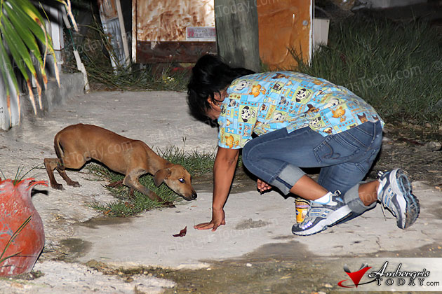 Mayor Keeps Promise of Humane Capturing of Stray Dogs