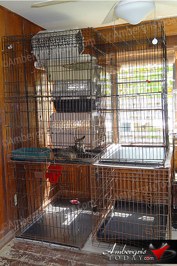 Cattery Donated to Saga Humane Society