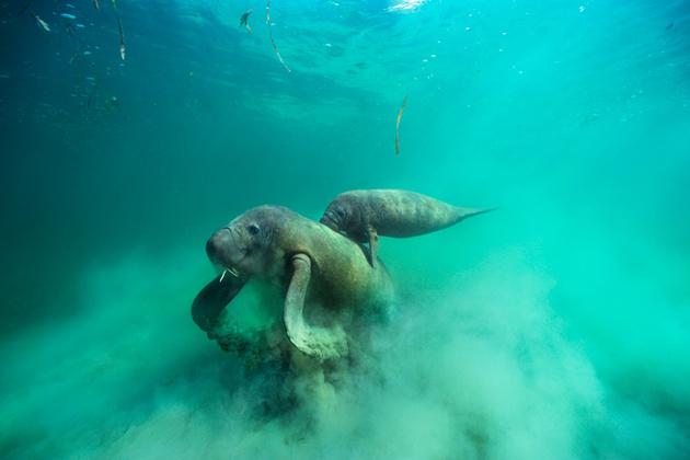 Mesoamerican Reef Belize