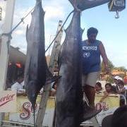 San Pedro Dominates in Mahahual, Mexico Fishing Tournament