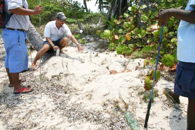 Turtle Nests Saved from High Surf in Ambergris Caye