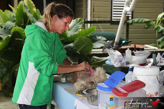 Saga Humane Society Has a Handful of Work on Ambergris Caye