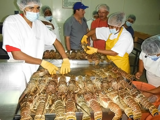 Seafood market opens in san pedro ambergris caye for Phil s fish market eatery