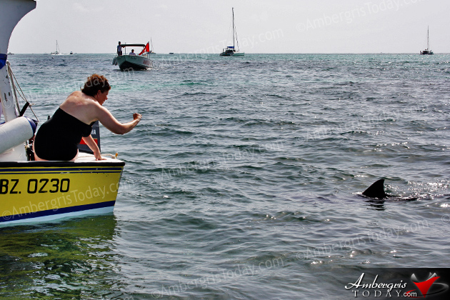 Authorities Assist Stranded Juvenile Pilot Whale in San Pedro, Ambergris Caye, Belize