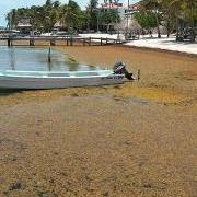 Where's the Beach? – Sargassum Problems!