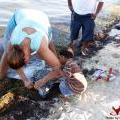 Dead Sea Creatures Wash Ashore Unexplained in Ambergris Caye