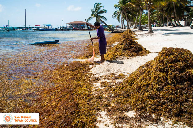 Sargasso Releases Poisonous Gas - Are islanders Getting Sick?