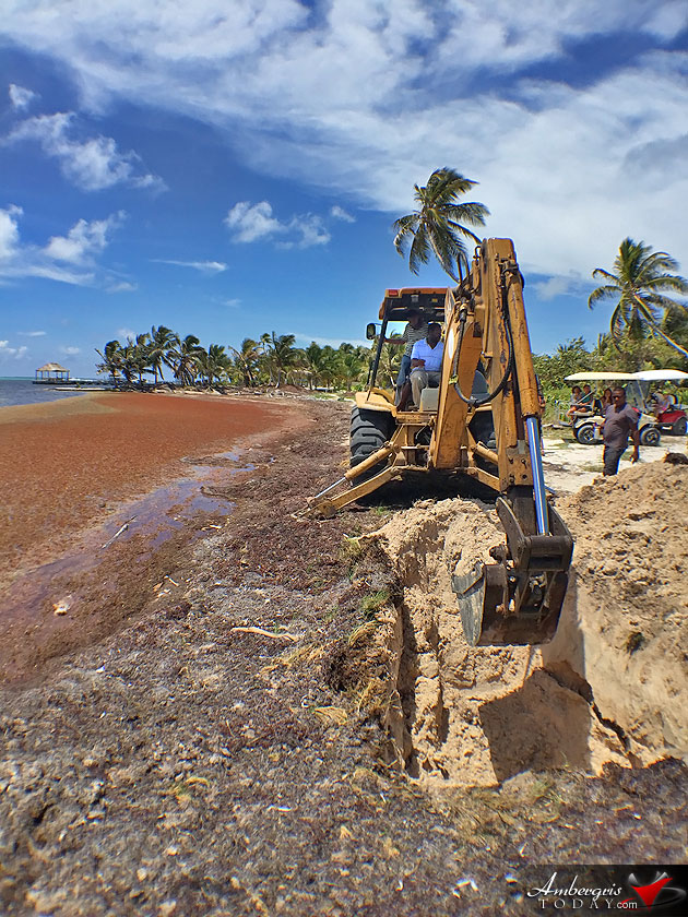 Sargasso Situation Causes Tourism Cancellations in Caribbean, Is Belize Next?