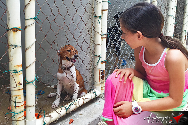 Saga Humane Society Conducts Adoption Drive