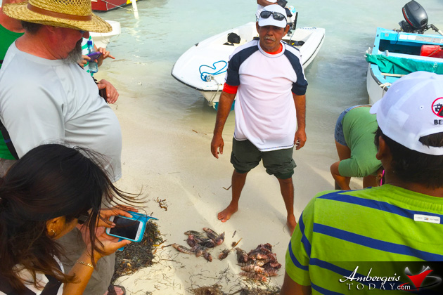 Over Five Hundred Lionfish Speared at Lionfish Derby In Caye Caulker