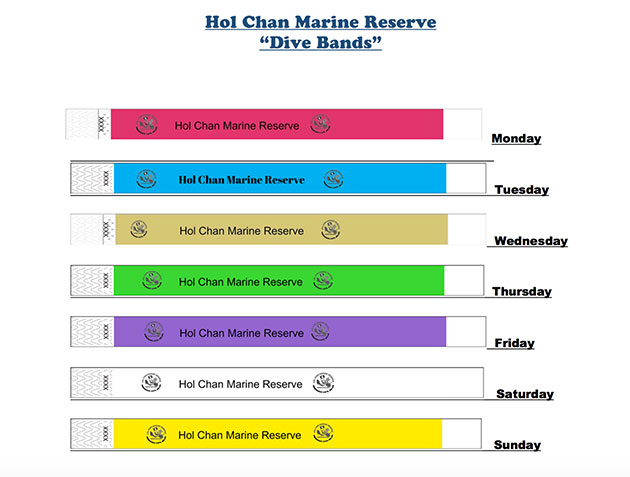 Dive Bands Required for Recreational Use at Hol Chan Marine Reserve