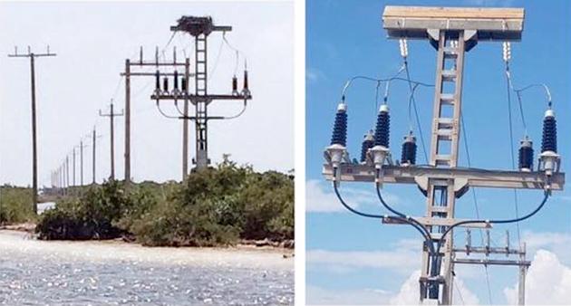 BEL Removes Osprey Nest from Transmission Lines, Installs Platforms for Birds