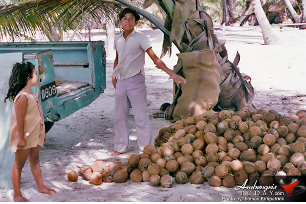 coconut farming industry san pedro belize
