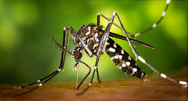Rainy Season Opens, Public Precautions Given to Prevent Dengue and Zika