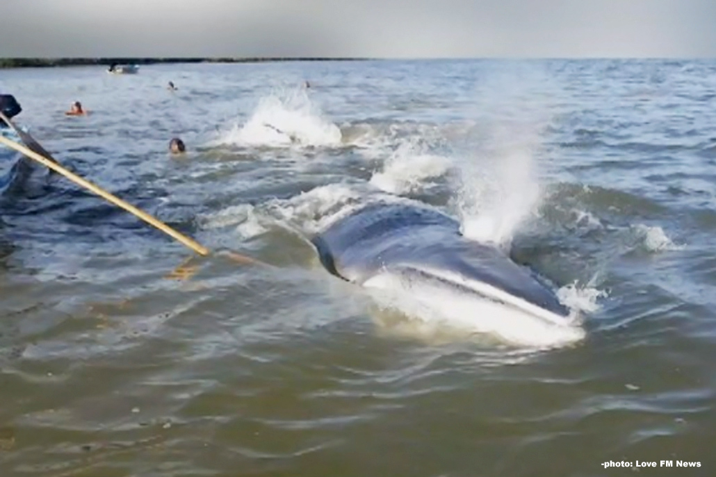 Second Whale Death Reported in Belizean Waters