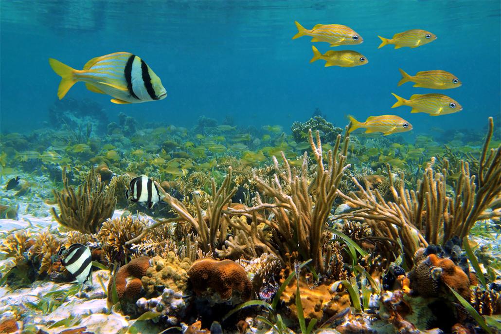 Mesoamerican Reef gets improving bill of health