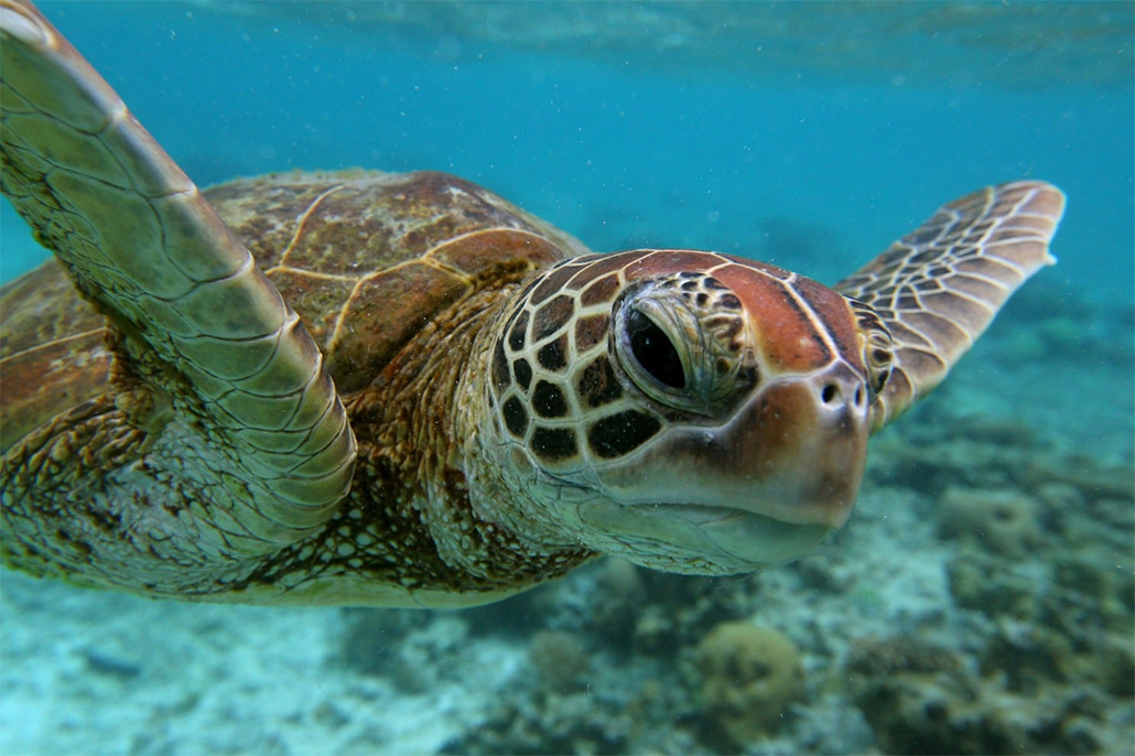 Fisheries Department Reminds Public of Illegal Poaching of Sea Turtles