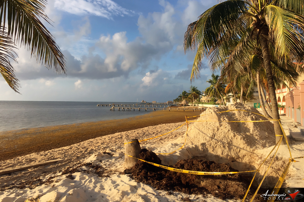 Resorts Are Building Beaches with Sargasso
