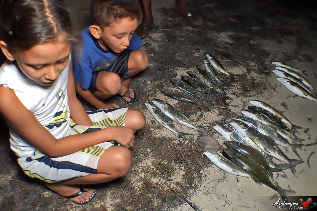 Dead Bone Fish Wash Up on Shore on Ambergris Caye, Residents Concerned