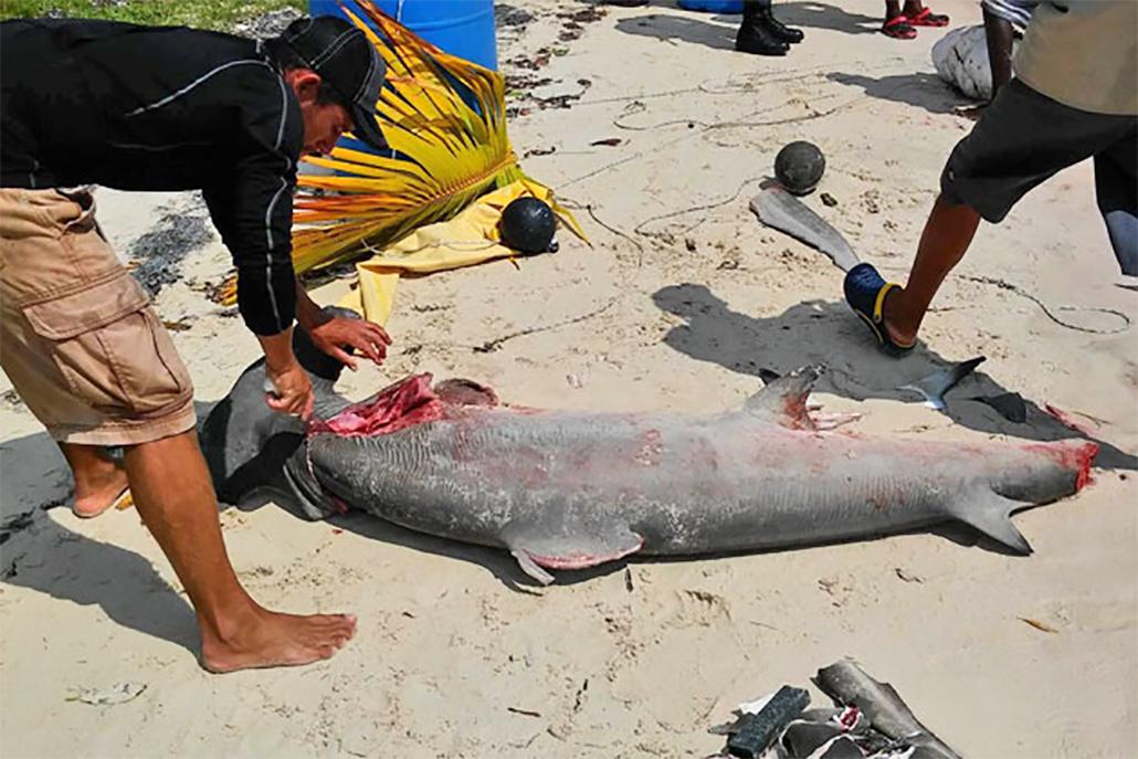 Closure of the Shark Fishing Season