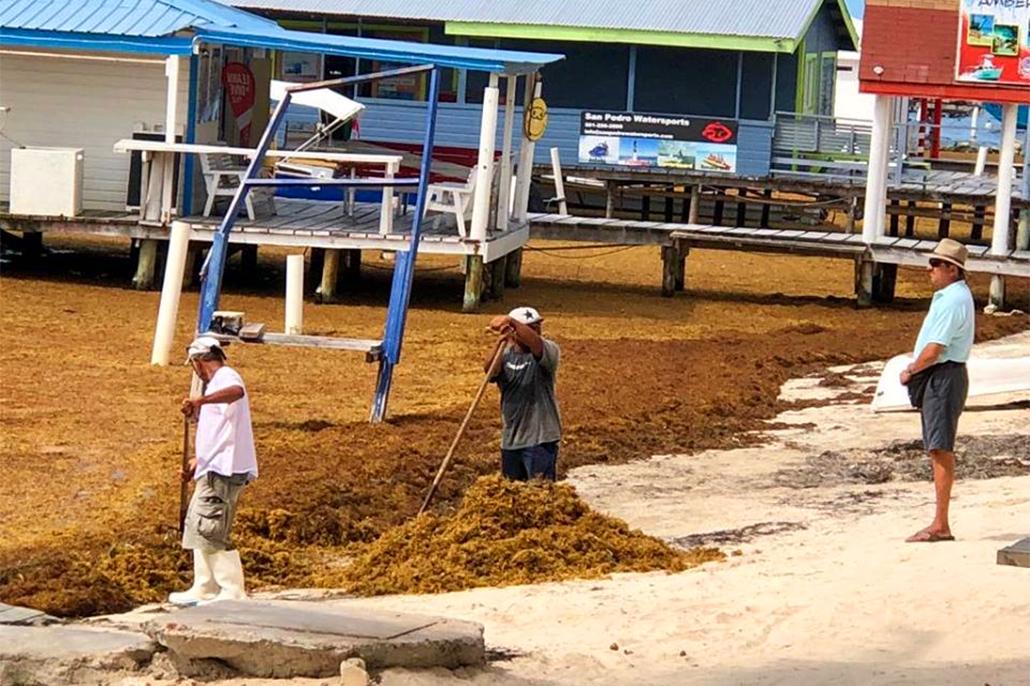 SPTC Declares Sargassum Beaching A Natural Disaster