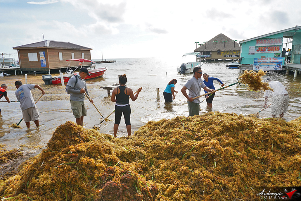 1700 Yards of Sargassum Removed in Two Day Cleanup Campaign
