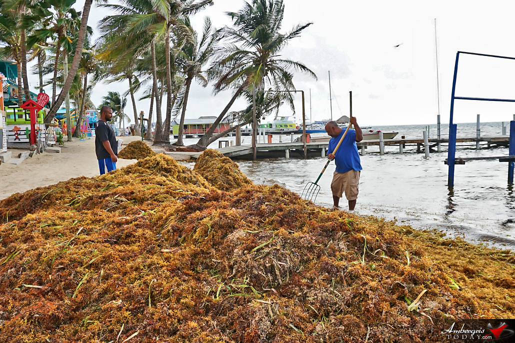 BTB Secures Assistance for Stakeholders in Sargassum Affected Areas