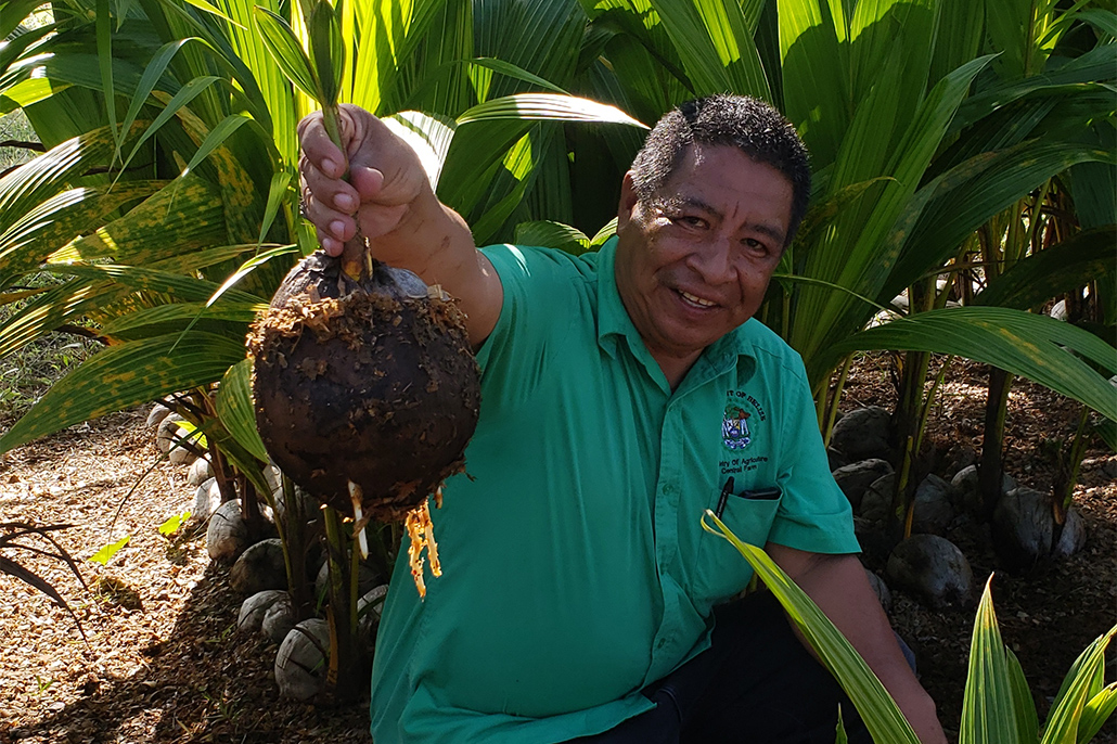 Belize and Caribbean Farmers Prepare for Coconut Boom