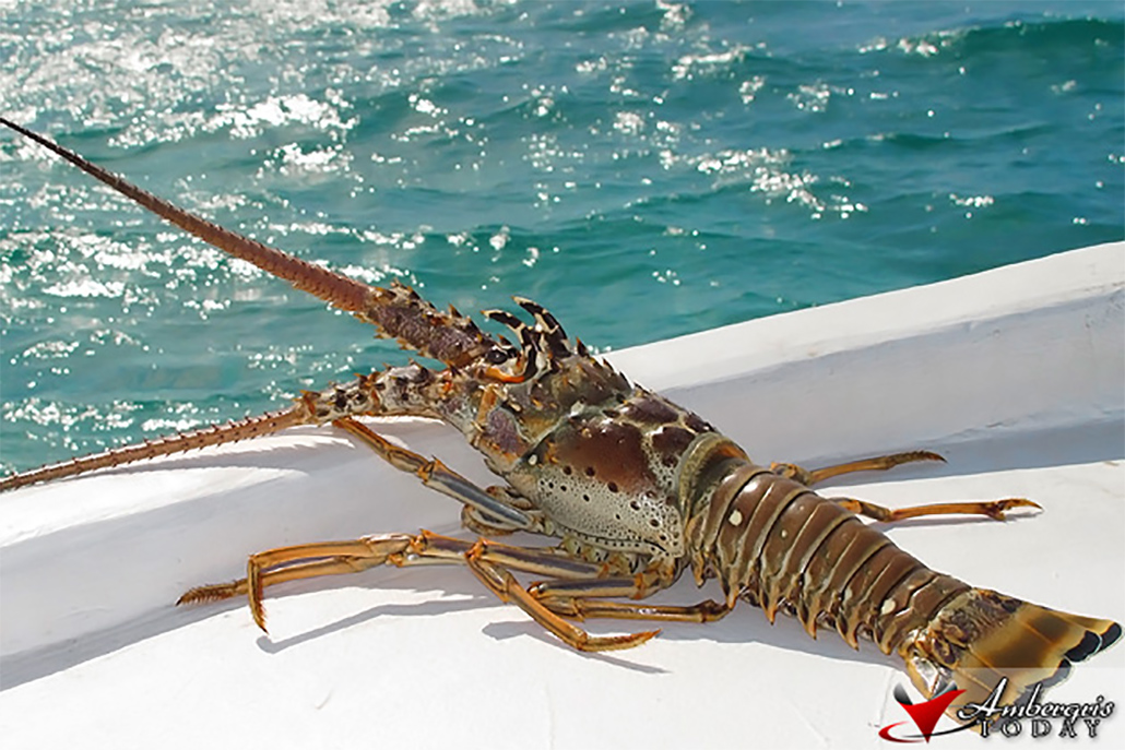 Lobster Fishing Season Officially Closed