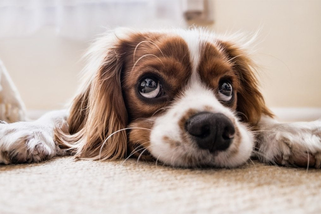Canine Distemper Is A Threat To Your Puppy And Dog