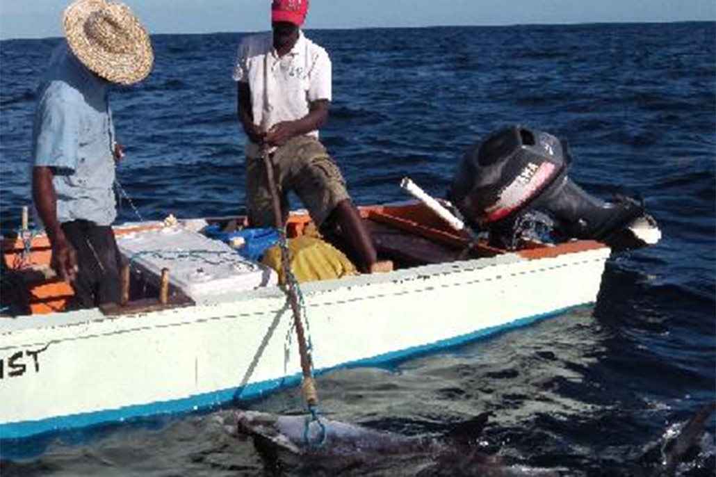 Caribbean Regional Fisheries Mechanisms Holds High-level Fisheries Meetings in Belize