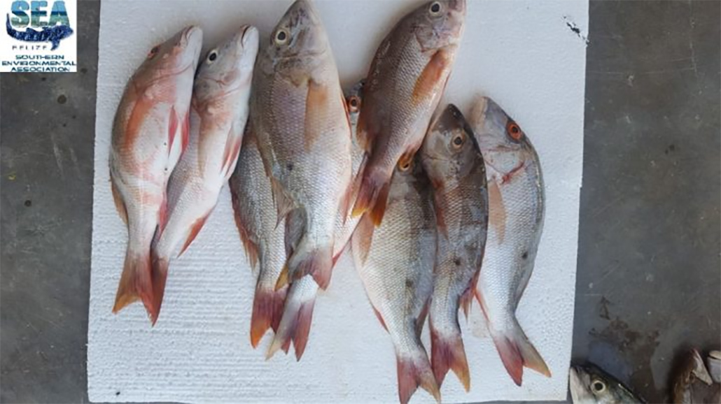 Hondurans Busted for Fishing in Belizean Waters