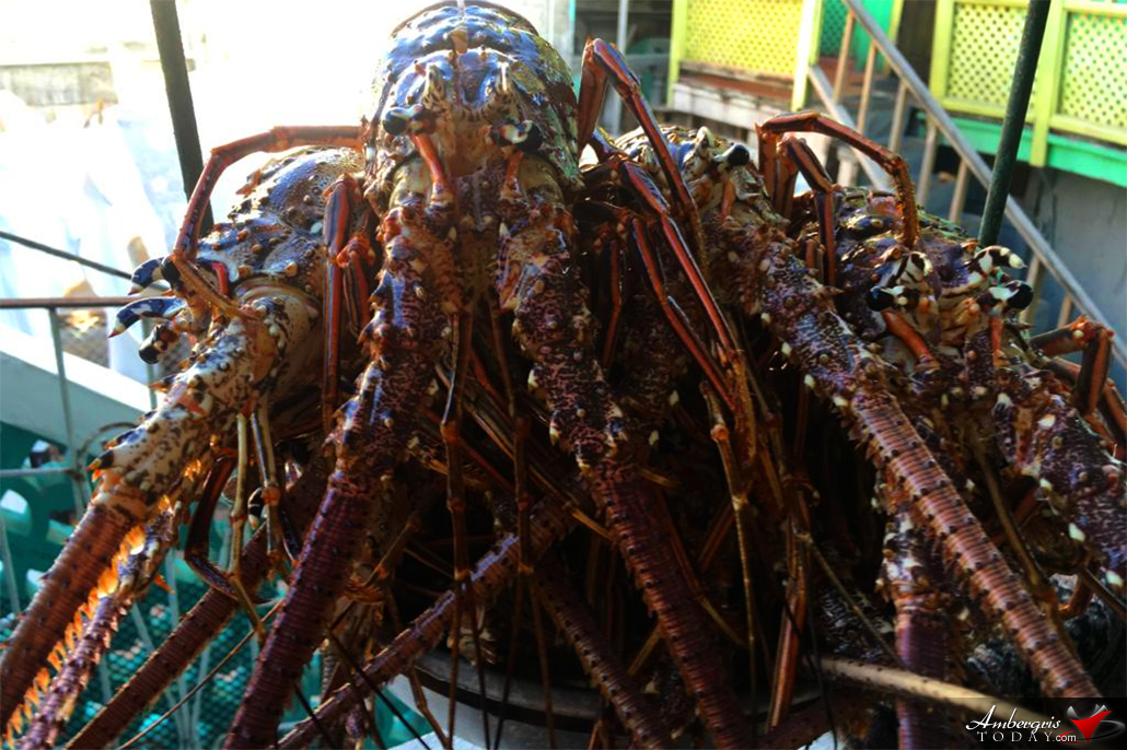 Lobster Season Closure Announcement