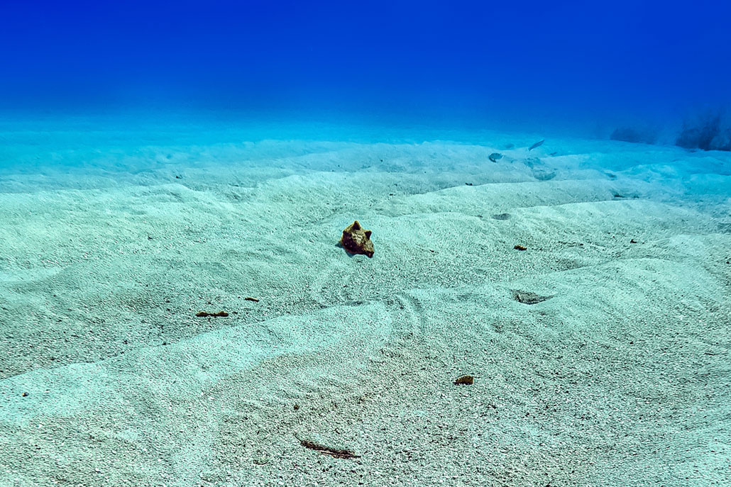 Why Did the Conch Cross the Ocean Bottom?